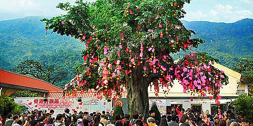 農曆新年好去處:新年祈福 @ 大埔林村許願樹