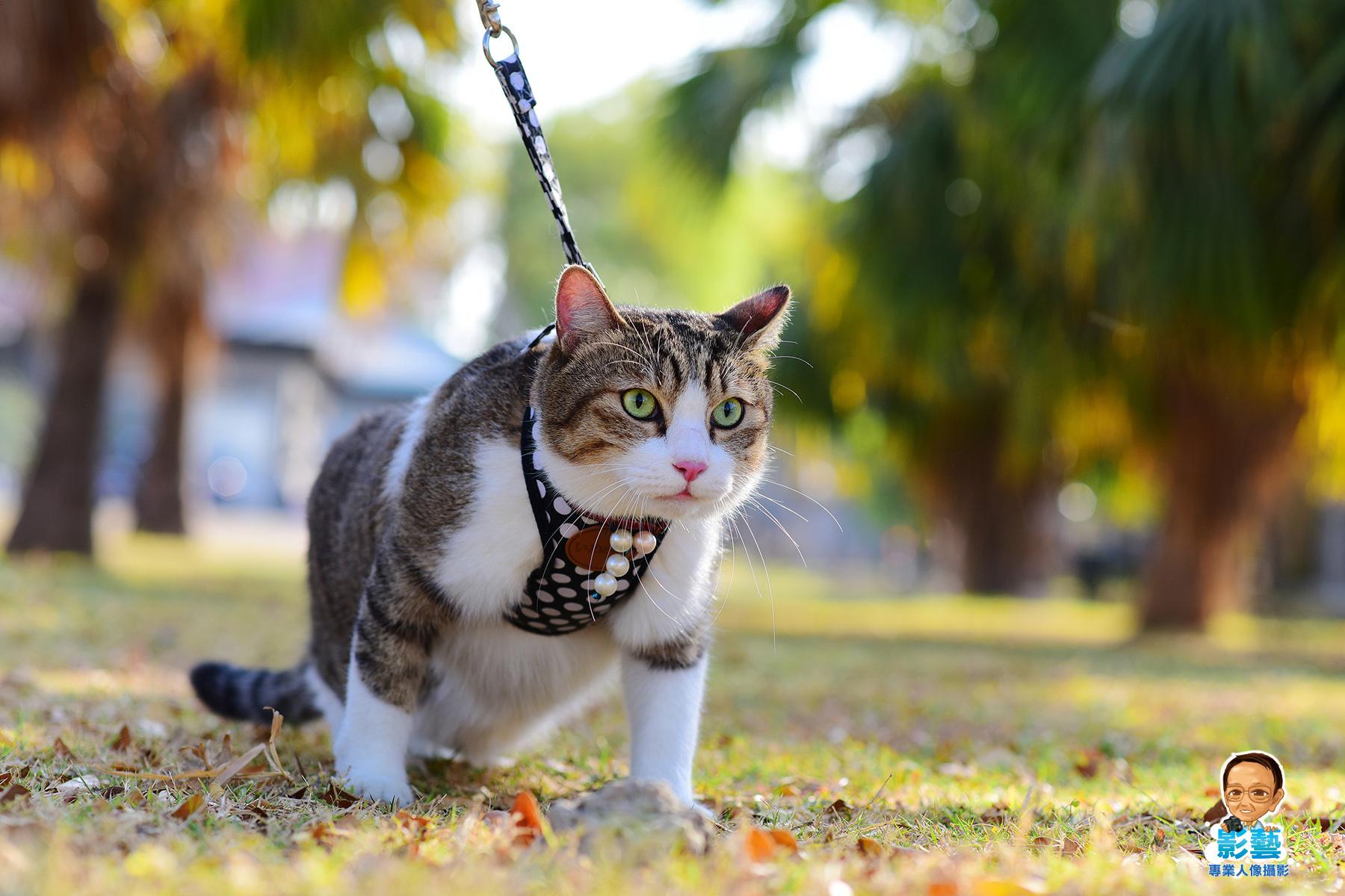 寵物攝影-貓咪戶外攝影