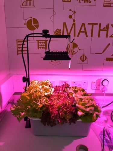 私人補習/燈飾工程/STEM教育/農業園藝服務