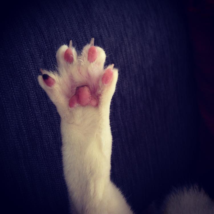 寵物訓練師-莫格