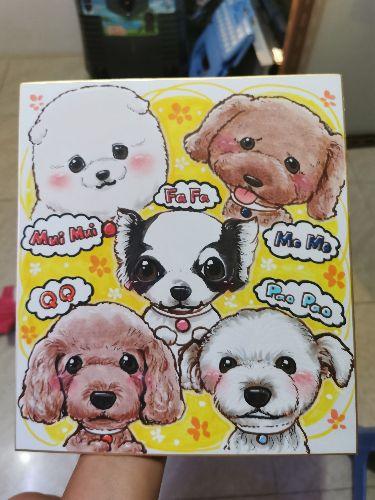 baby5上門/住宅寵物美容